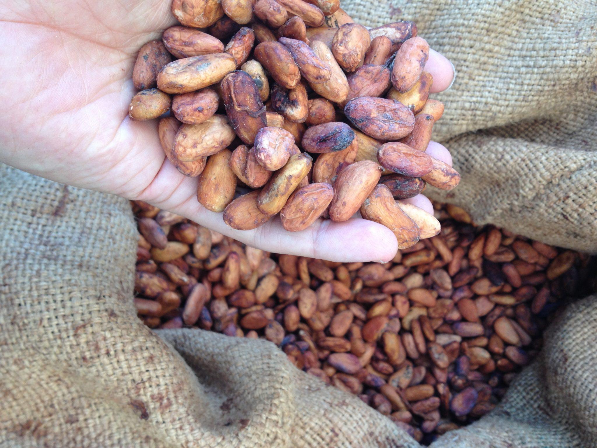 Fresh Arriba Cacao