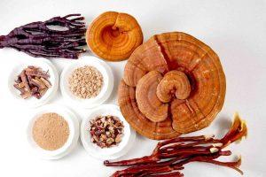 Medicinal Herbs Healing Plants and Reishi ganoderma