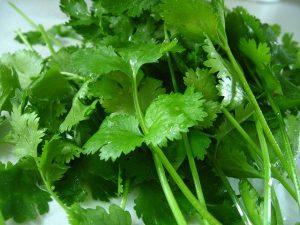 cilantro benefits