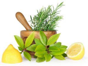 Top Medicinal Foods for Your Diet