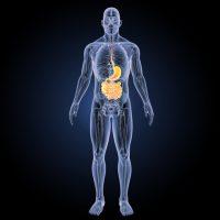 digestive track enteric nervous system bioavailability