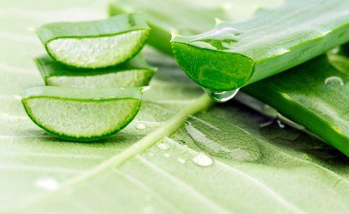 Image for Aloe Vera Benefits