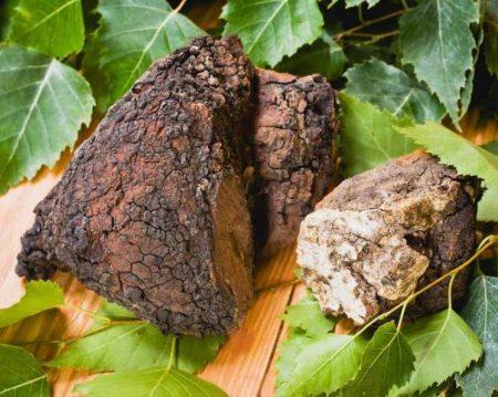 Chaga Mushroom Medicinal Superfood Anti Inflamatory