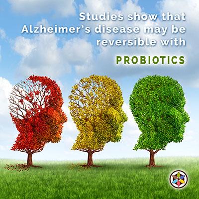 Reversing Alzheimers Gut Bacteria Probiotic Juice