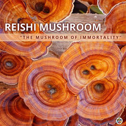 Reishi Mushroom Of Immortality